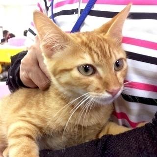 9月17日(日)  猫の譲渡会  名古屋市西区 ふれあい館  みな...