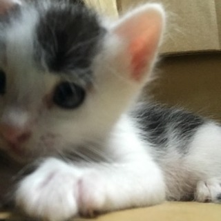 7月19日産まれ 仔猫