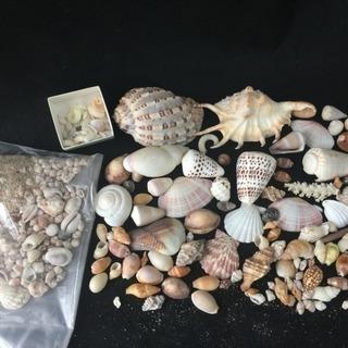 ◆ お洒落な貝殻 まとめて◆