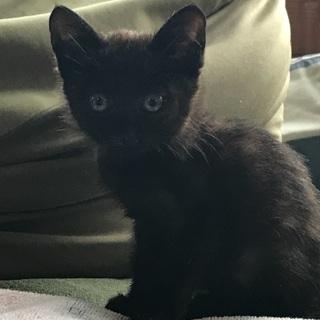 可愛い黒猫ちゃんの里親募集中です╰(*´︶`*)╯♡