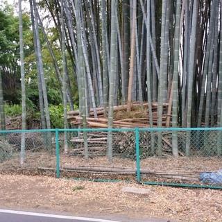 通学路にある竹林整備中2