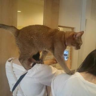 猫様のお茶会 猫友交流会