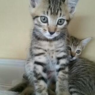 6月27日生まれの子猫ちゃんたち