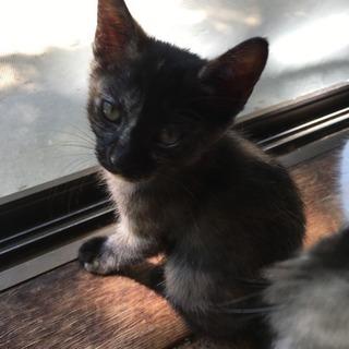 里親さん募集 - 猫