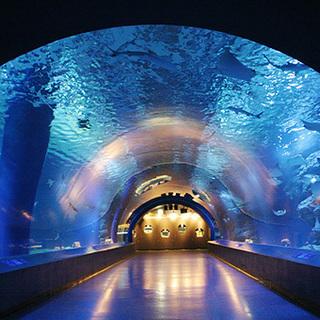 9月3日(9/3)  イルカやアシカのショーも楽しめる!水族館見学...