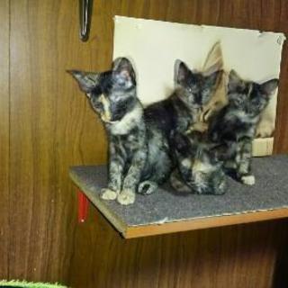 可愛いサビ猫四姉妹♪
