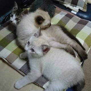 子猫差し上げます。