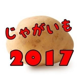 ☆ジャガイモの収穫バイト☆