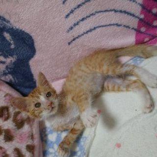推定3ヶ月メス😺子猫の里親さんを探しています!