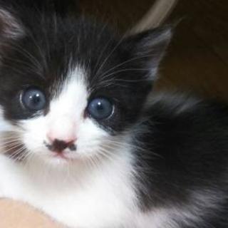 生後3週間のメスの子猫