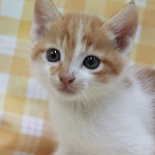 保護した子猫の里親を募集致します