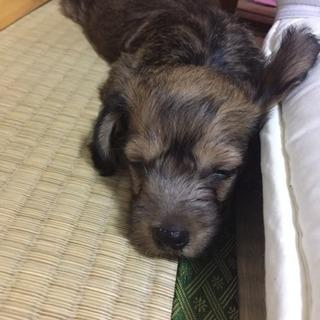 7月9日産まれ  雑種犬