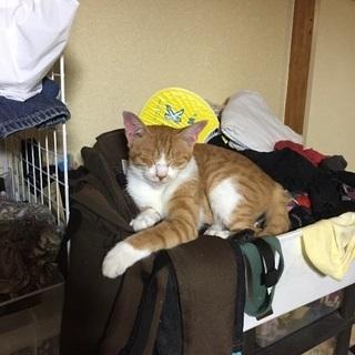 現在、うちで飼っている猫の里親さんを募集します