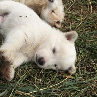 生まれたばかりの子犬