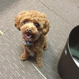 愛犬を探しています。