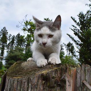 家に居付いてしまった野良猫の里親募集