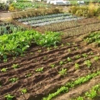 9月中旬まで、お好きな日時に種まき作業