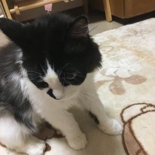 迷い猫です