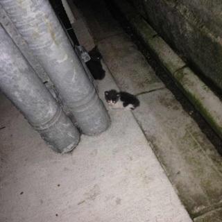 産まれたての子猫の里親さん募集してます!