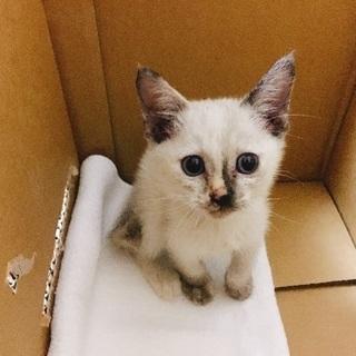 急募‼︎人懐っこい子猫