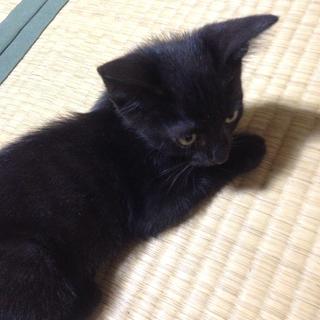 生後2ヶ月の黒猫オスです。