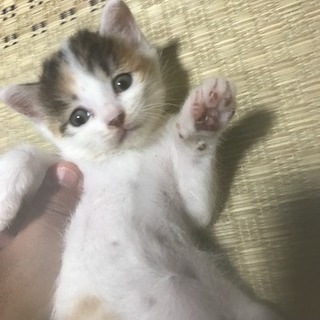 推定1ヶ月の元気なメス猫