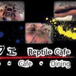 爬虫類カフェ✨ROCK STAR✨の会員カード持ってる方✨