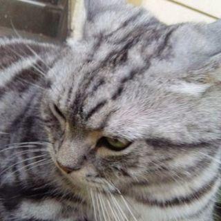 助けて❗猫アレルギー発症のため   (交渉中)