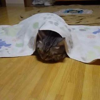 助けて❗猫アレルギー発症のため   (交渉中) - 国分寺市