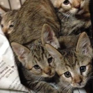 2カ月の子猫 6匹います