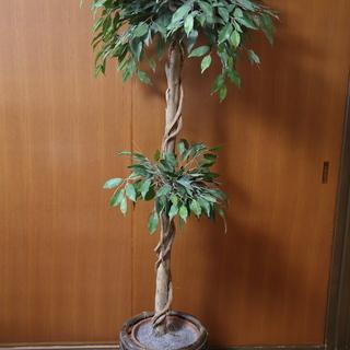 居間に置いていた人工観葉植物 (ベンジャミン)
