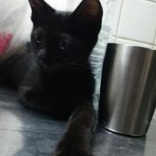黒猫ちゃんです✩