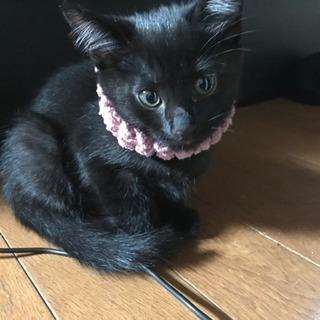 黒猫、子猫の里親募集