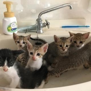 生後50日ほどの子猫6匹^ ^