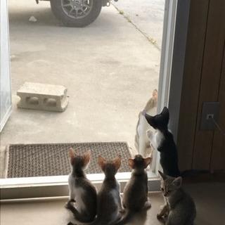 生後50日ほどの子猫6匹^ ^ - 糸満市