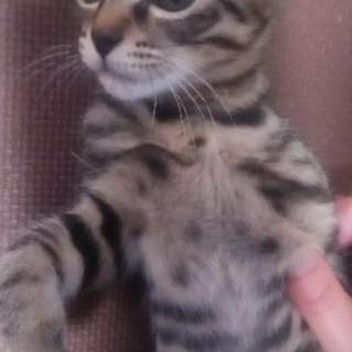 三ヶ月くらいの雄猫