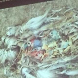 9月9日(土)8時〜海岸のプラスチックゴミ拾い