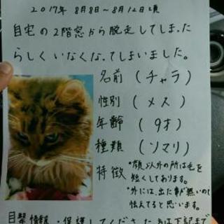 迷い猫捜してます