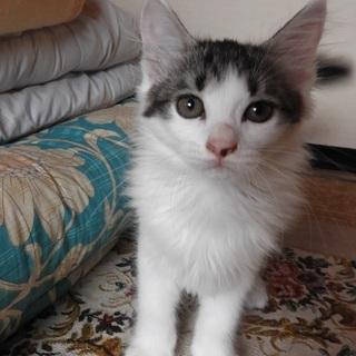 かわいい子猫の兄妹・・・里親になってください!