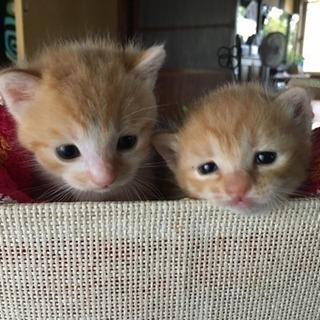 かわいい子猫の里親になってください