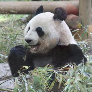 9月22日(9/22)  動物たちに癒されよう!上野のパンダを見...