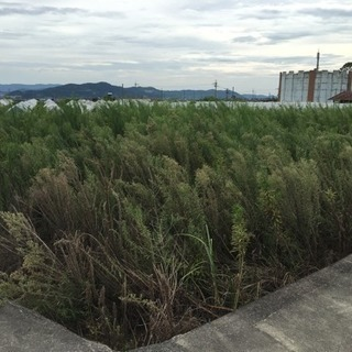 畑、土地、駐車場 貸します。 − 和歌山県