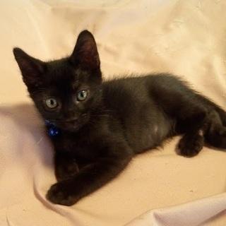 くまみたいな黒猫子猫兄弟