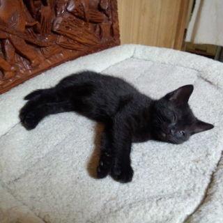 黒猫の子猫 3兄弟です