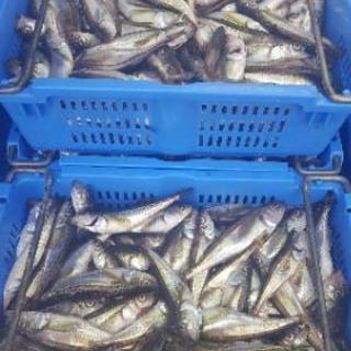【月給17万~】鮮魚の出荷作業🐟運搬🚚