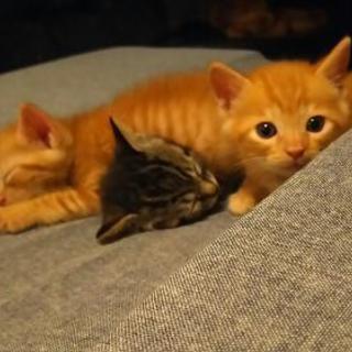 生後間もない捨て猫の里親さんを募集します。