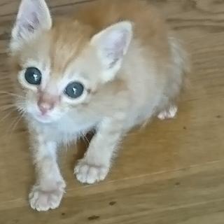 可愛いオスの子猫の里親を募集しています