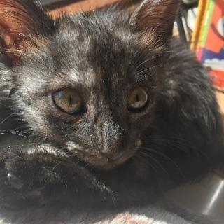 9月2日に保護した子猫ちゃんの里親募集!