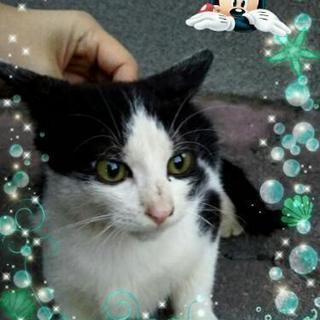 美猫くんです(^^)