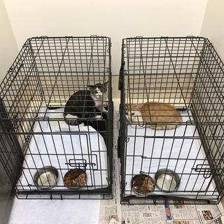 母猫と生後3〜4カ月の子猫里親募集